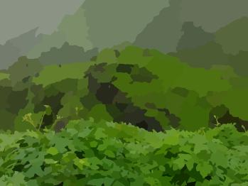 hedge-41997_640