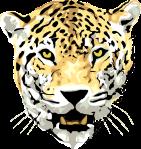 panther-29442_640