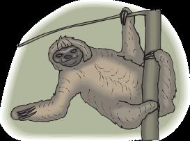 sloth-46160_640